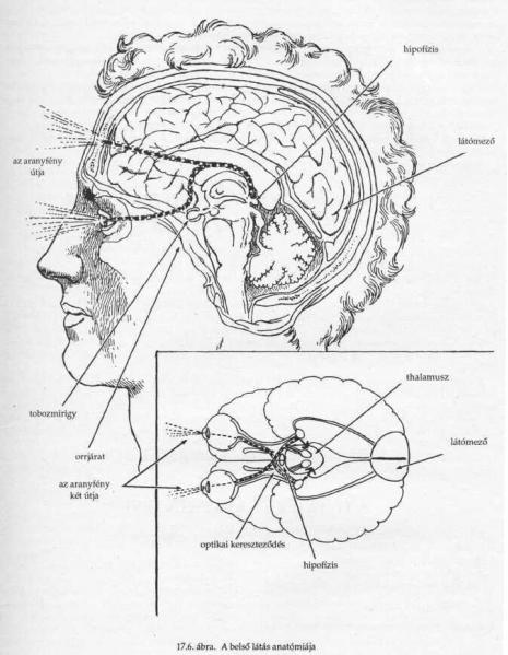 belső látás gyakorlatok Myopia van